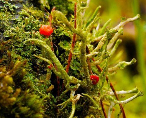 Flora and fauna on sliabh an Iarainn